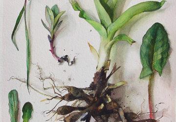 Lynne Railsback and Katie Musolff: Nature Studies